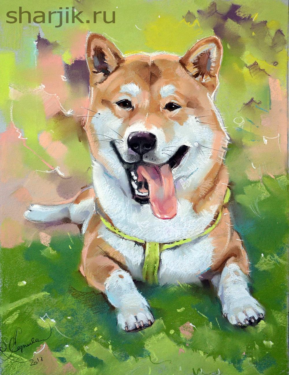 портрет собаки по фото, портрет питомца по фото, портрте собаки, сиба ину портрет, шиба ину фото, живопись собака, портрет собаки