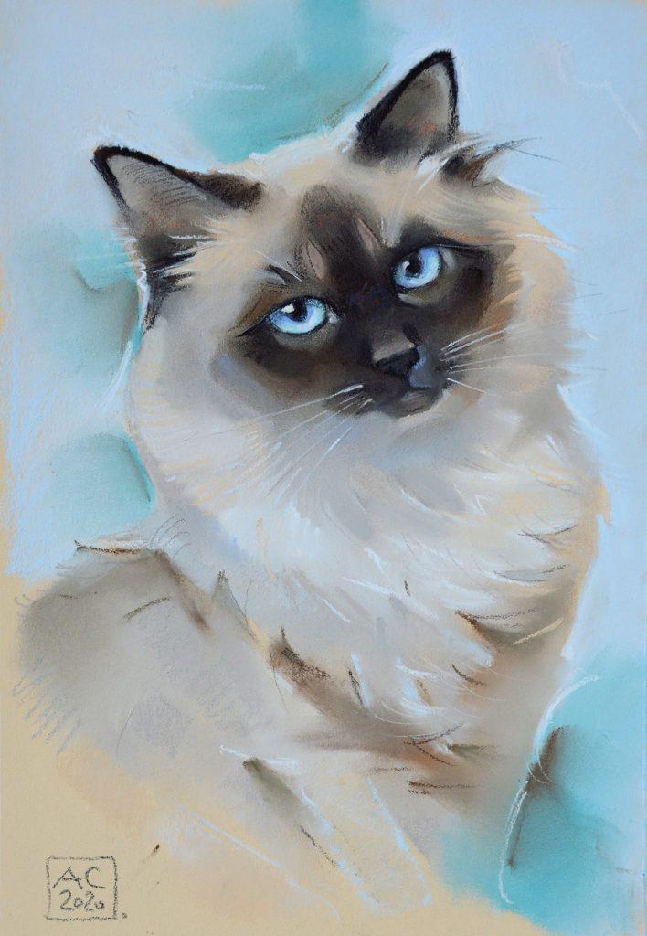 кот, рисунок, потрет, пушистый кот рисунок