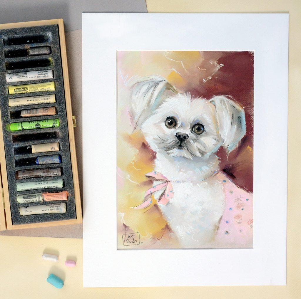 собака, милая собачка, собака модель, собаки по фото