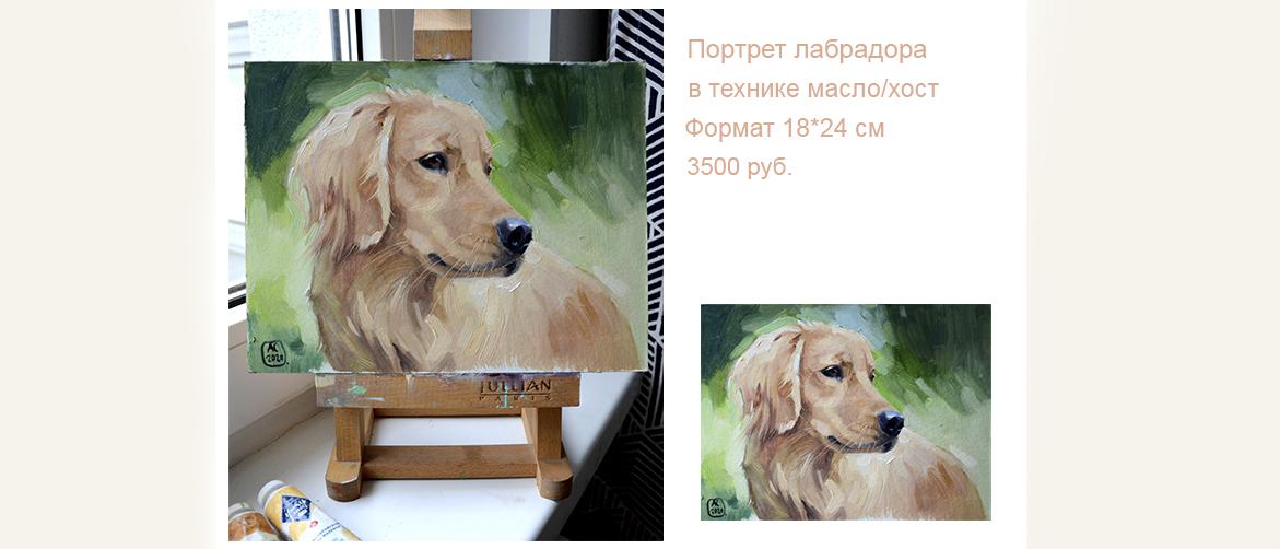 Портерт собаки, золотистый ретривер, пепельный лабрадор