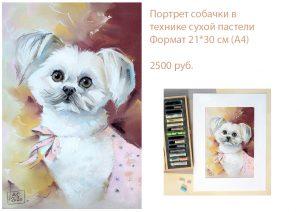 Портрет Ши Тцу, портрет болонки, заказать портрет маленькой собачки