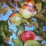 яблоки, картина продажа, яблочки живопись маслом